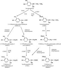 Neurotransmitter Chart Neurotransmitter An Overview Sciencedirect Topics
