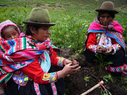 ALIMENTACIÓN-PERÚ: Mujeres preservan biodiversidad de la papa