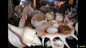 sea shells collection my greek seashells collection youtube