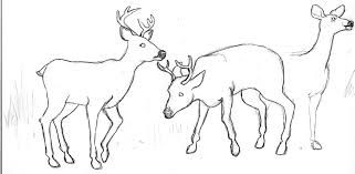 Deer Drawing Images At Getdrawings Com Free For Personal