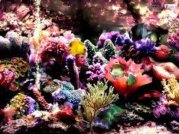 Fish Tank Wallpaper With Colorful Coral Reef Fish Tank Wal Flickr