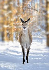 Bildergebnis für maus im winterwald