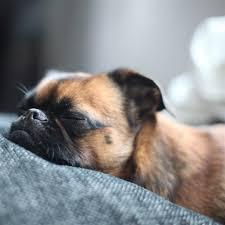 pug puppies ipad wallpaper. Delighful Puppies Sleeping Puppy Dog IPad Air Wallpaper Throughout Pug Puppies Ipad Wallpaper