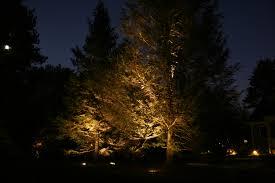landscape lighting trees. yard lights on a tree landscape lighting trees i