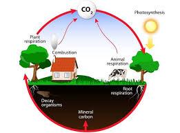 Energy Flow In Ecosystem Tutorialspoint