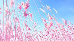 Free download Vs Pink Desktop Wallpaper ...