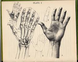here s a funny little book by oliver senior how to draw hands it s part of a huge series of guides to drawing specific things