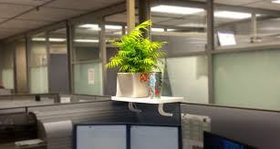 office cubicle plants. supersills for you office cubicle plants