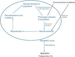 Darwin S Theory Of Evolution Chart Pearson Pre Darwinism Darwinism And Neo Darwinism Chapter 3