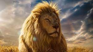 Lion Wallpapers 4k for PC or Mobile ...