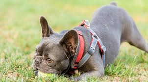 Voyager Harness Size Chart Best Harnesses For Small Dogs 2019 Ratings Reviews