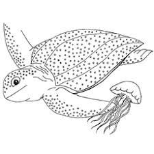 Ravishing Sea Turtle Coloring Page Preschool In Snazzy Top 10 Free