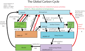 Carbon Cycle Flow Chart Oxygen Cycle Flow Chart Unit 9 Reading Image Details Diagram
