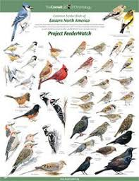 Bird Identification Chart Print The Bird Identification Chart Hang Up Next To The