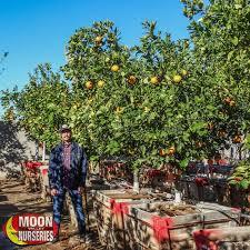 Apple Farm Orchards Near Asheville And HendersonvilleFruit Tree Nursery North Carolina
