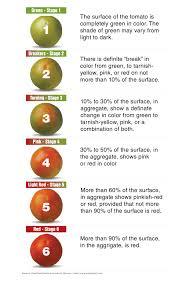 Freshpoint Tomato Ripening Chart V2