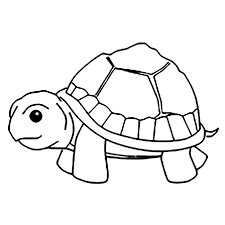 Tổng hợp tranh tô màu con rùa đẹp và đáng yêu