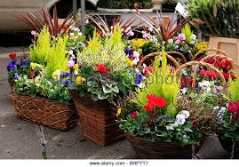 Flower Display Stand For Sale Display Stands Plants Stock Photos Display Stands Plants Stock 39