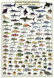 Details About Australian Fish Identification Fish And Marine Animals Laminated Wall Chart