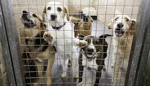 animal shelter pictures. Modren Pictures 30 Animal Shelters That Make America Proud Throughout Shelter Pictures