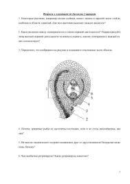 Контрольная работа по генетике iii вариант Задача № 1 Вопросы к олимпиаде по биологии 2 вариант 1 Некоторые