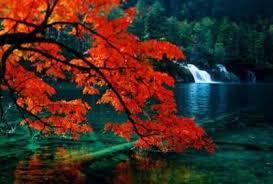 """""""家乡的红叶""""的图片搜索结果"""