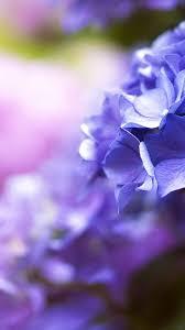 beautiful flowers 5k 4k wallpaper blue spring macro vertical