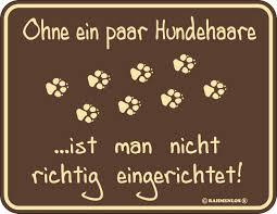 Rahmenlos Blechschild Hundehaare Mit Tollem Spruch Für Hundebesitzer