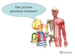 Организм человека без паразитов Как избавиться от неприятного   организм человека без паразитов