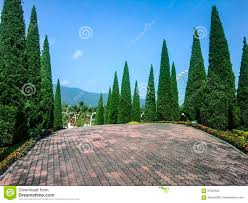 beautiful pine tree garden design art in royal garden cheng mai thailand