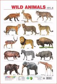 Animals Birds Wall Charts Buy Animal Kids Educational Wall Chart Wild Animals Domestic Animals Birds Children School Educational Wall Charts