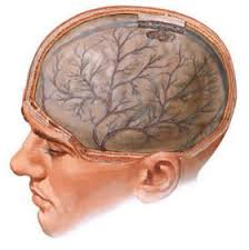 Гипоксия головного мозга Гипоксия hypoxia греч hypo лат  Гипоксия головного мозга