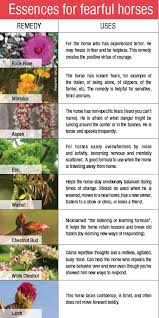 Bach Flower Remedies Chart Bach Flower Remedies For Horses Equine Wellness Magazine