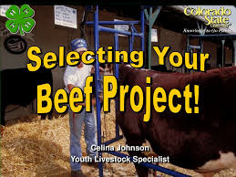 PPT - Celina Johnson Youth Livestock Specialist PowerPoint Presentation -  ID:749832