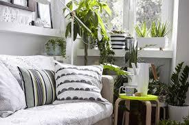 Living room corner filled with houseplants