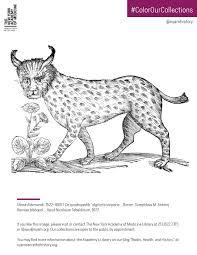 lynx from aldrovandi s de quadrupedib digitatis viviparis 1637 to the pdf