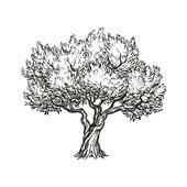 ベクトル イラスト の オリーブの木 クリップアート