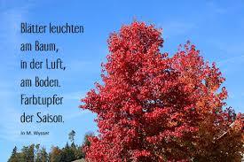 Gedichte Und Sprüche Kurze Und Lange Lustige Und Ernste Neue