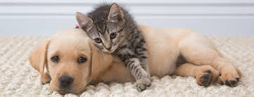 puppy and kitten cuddling. Simple Kitten Behind The Scenes At A Puppy And Kitten Photoshoot  Mark Rogers Pet  Animal Photography Blog To Puppy And Kitten Cuddling Y