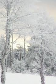 290 Best Snow Scenes Images Winter Snow Winter Time Winter Landscape