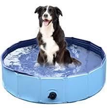 Image result for big dog swimming pool