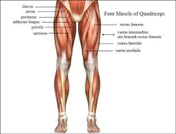 the 6 absolute best quads exercises you can do