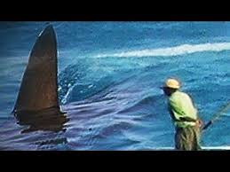 megalodon shark sightings 2015. Brilliant Megalodon Megalodon Shark Caught On Tape  2015 Collection Of The Best Part 2   YouTube With Sightings