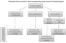 File Conversion Of Proto Oncogene Flow Chart Jpg Wikimedia