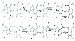 Ag Substituting Into The Triple And Double Hydrogen Bonds
