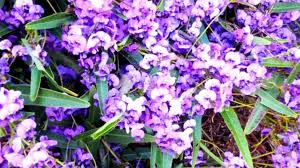 australian native plants guide for your