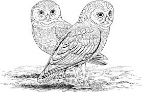 Owl Coloring Pages Free Printable Classic Style Printable Owl
