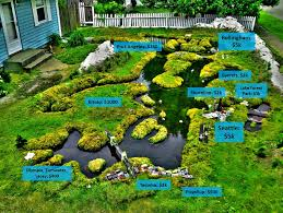 Small Picture Seattles pioneering RainWise stormwater pollution prevention