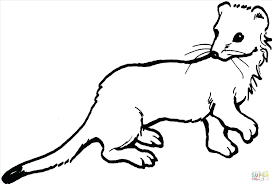 Cute Ferret Drawing At Getdrawingscom Free For Personal Use Cute