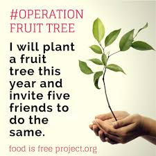 How To Plant Fruit Trees With Pictures  WikiHowPlanting A Fruit Tree